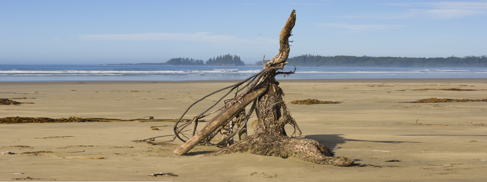 Stumps on Beach